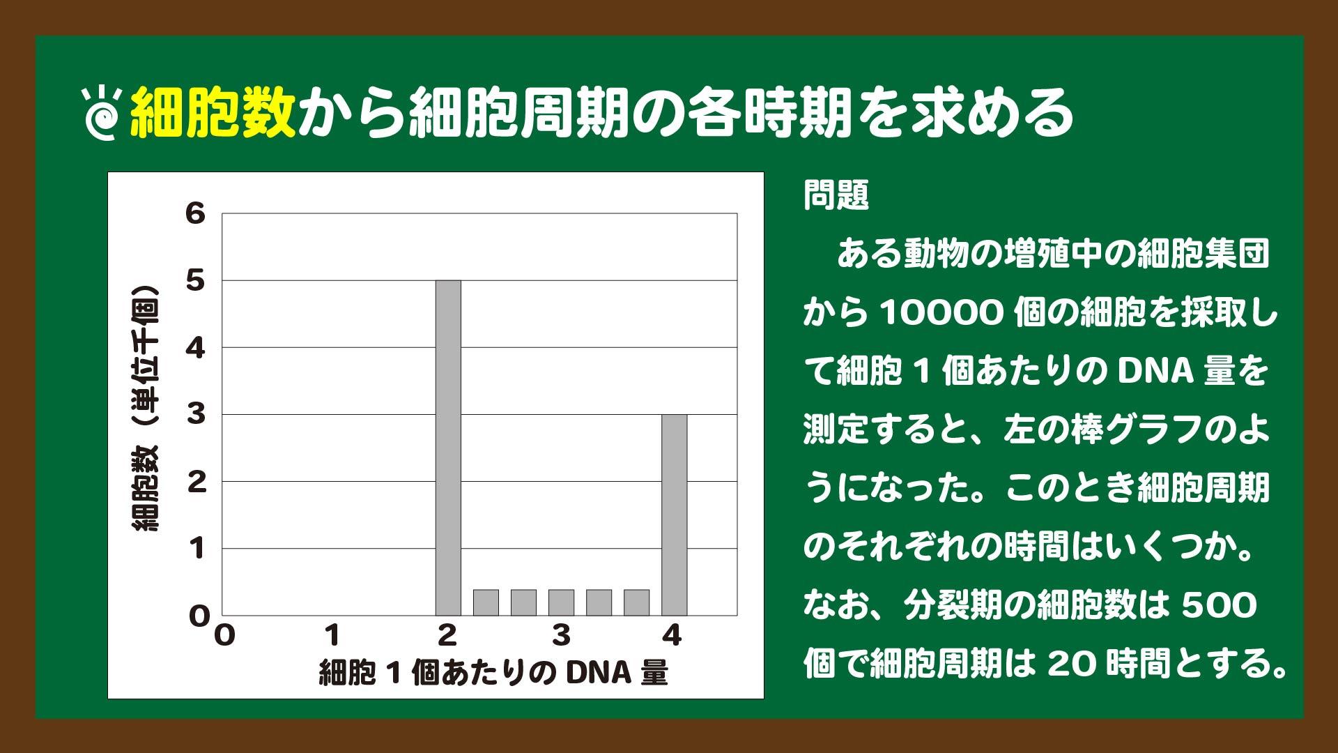 スライド8:細胞数から細胞周期の各時期を求める問題