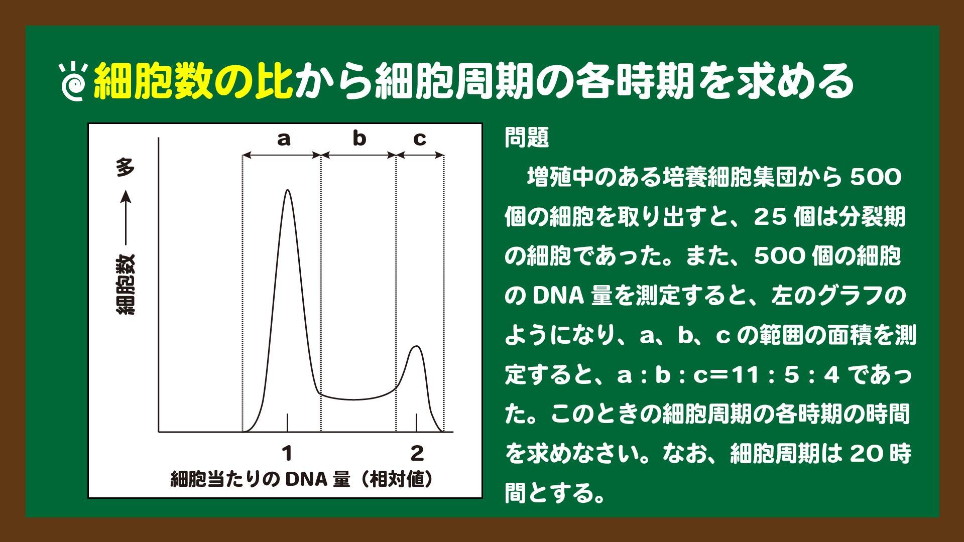 スライド11:細胞数の比から細胞周期の各時期を求める問題