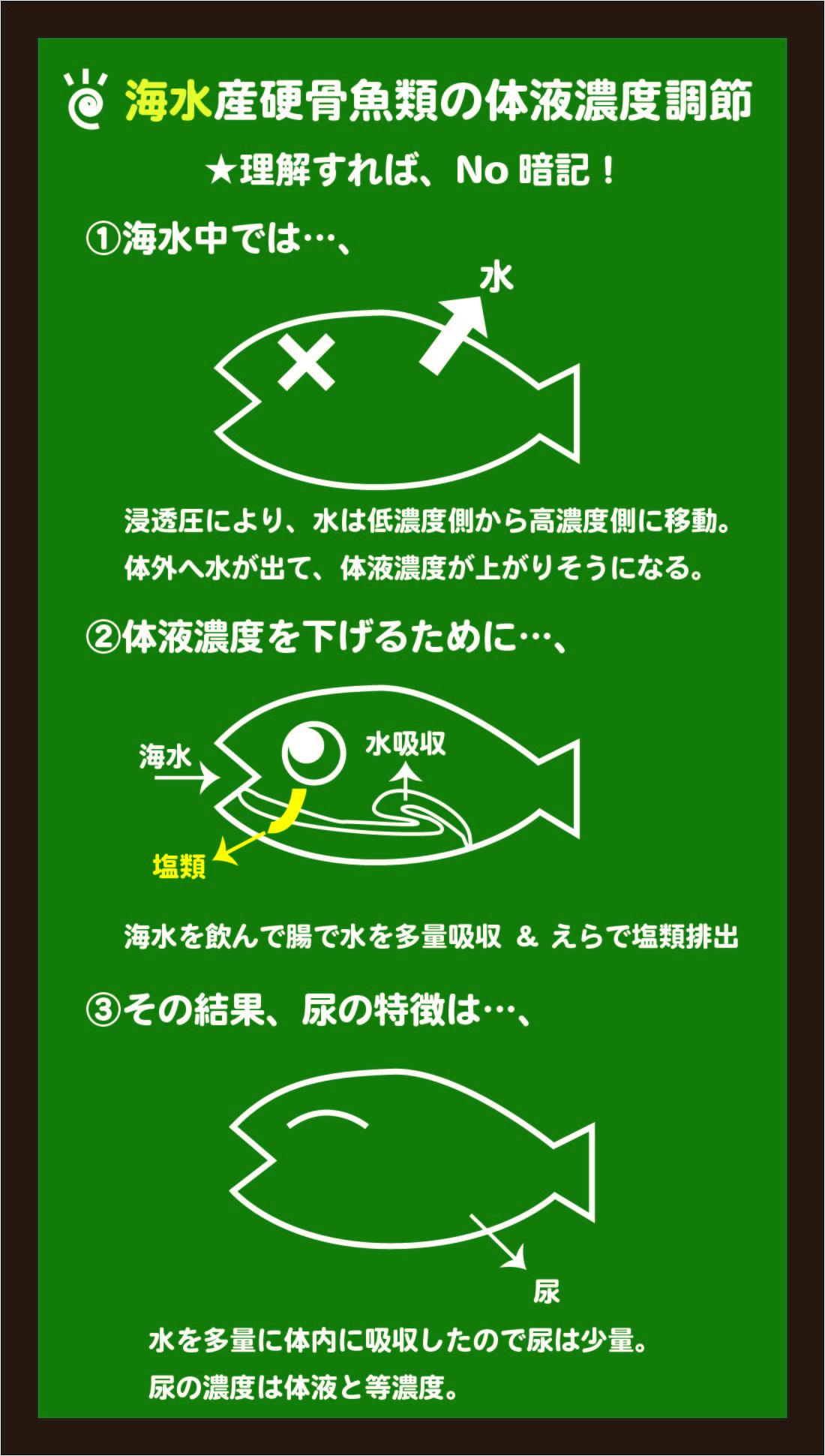 スライド5:海水魚の体液濃度調節のしくみをイメージする