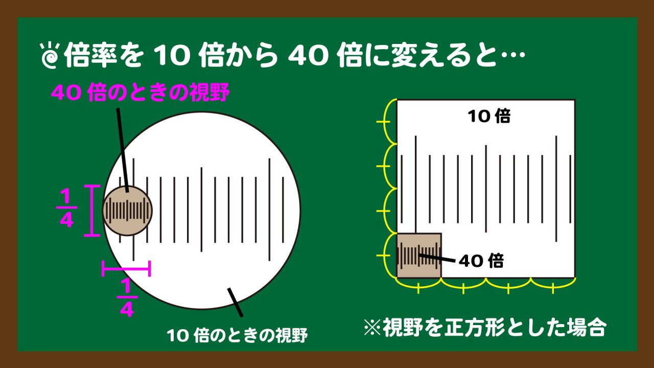 スライド5:倍率を10倍から40倍に変えたときの視野の広さ