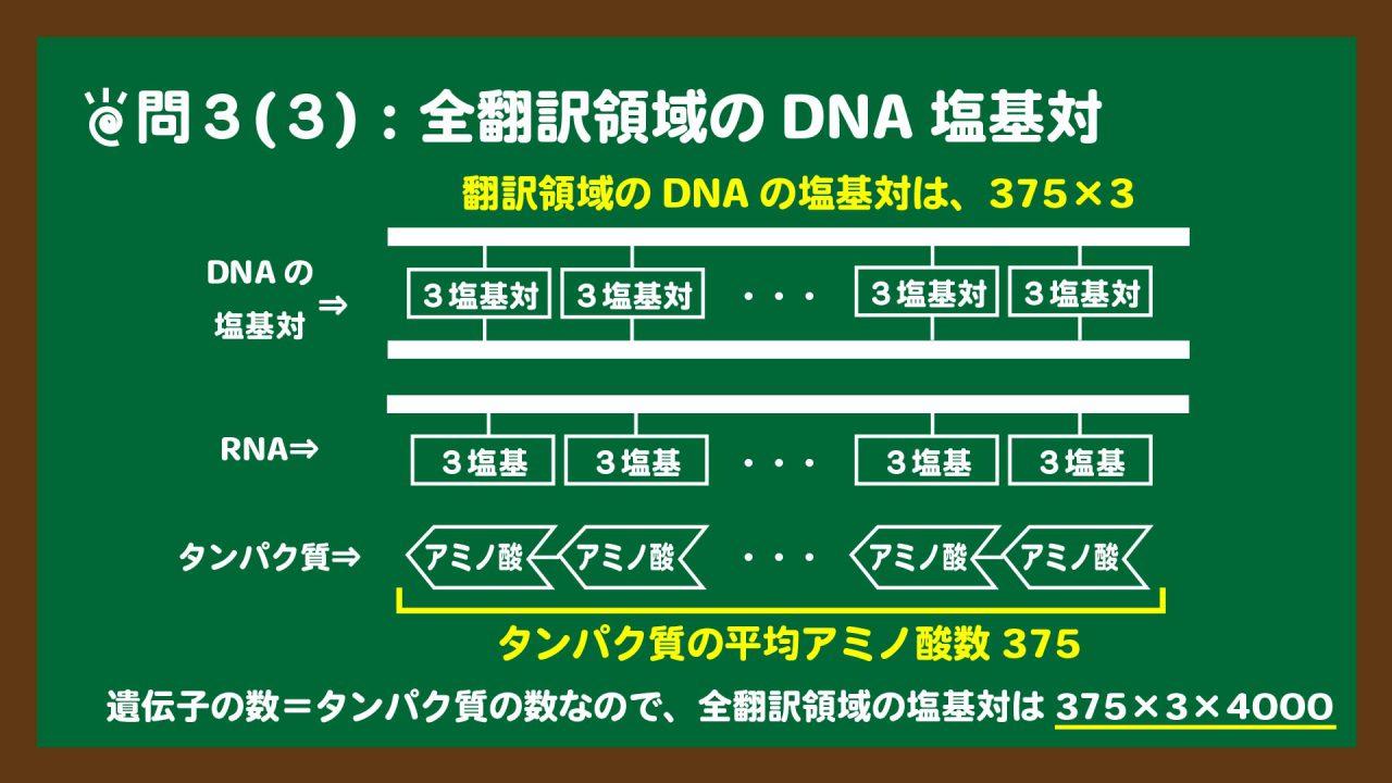 スライド14:翻訳領域のDNAの塩基対のイメージ図