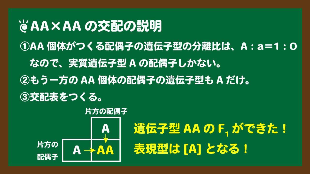 スライド7:AA×AAの交配で生じるF1の遺伝子型と表現型