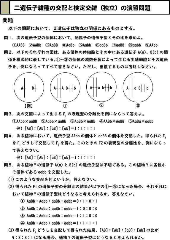 スライド1:二遺伝子雑種の交配と検定交雑(独立の関係のみ)の演習問題