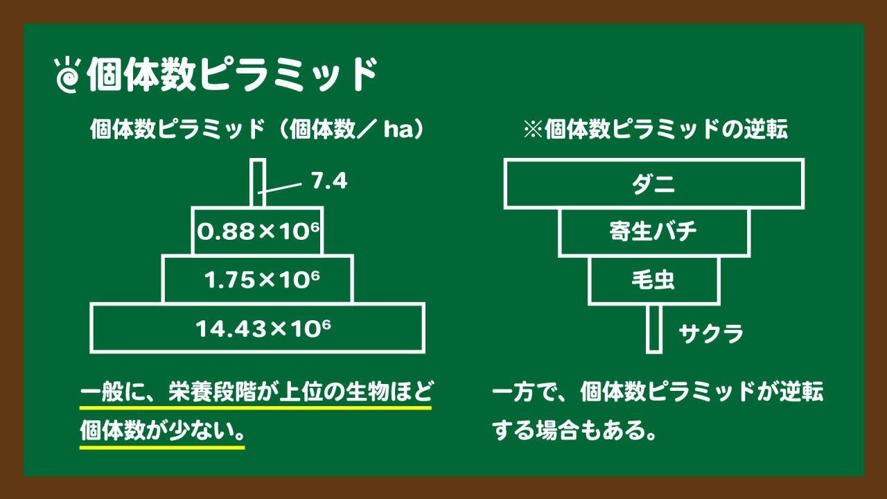スライド3:個体数ピラミッドの図