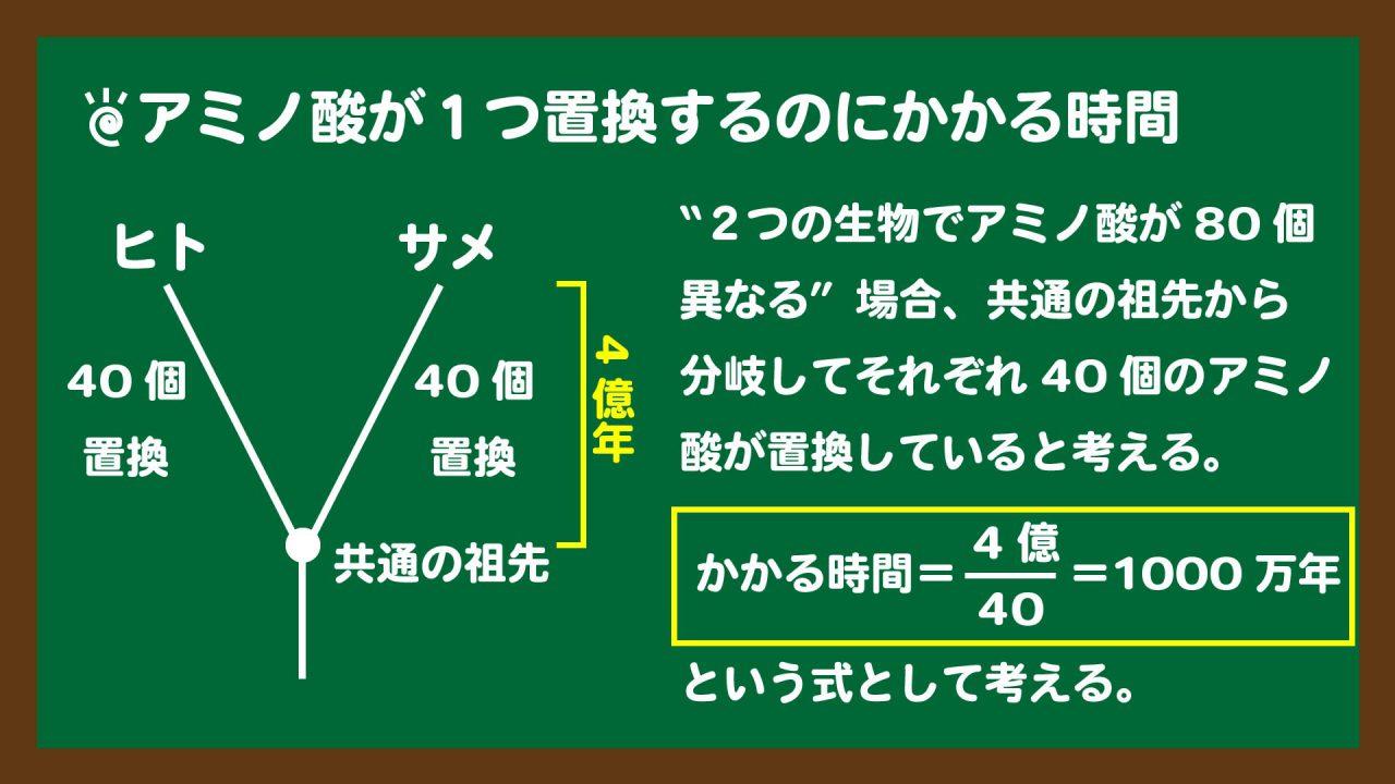 スライド4:アミノ酸が1つ置換するのにかかる時間の計算の考え方
