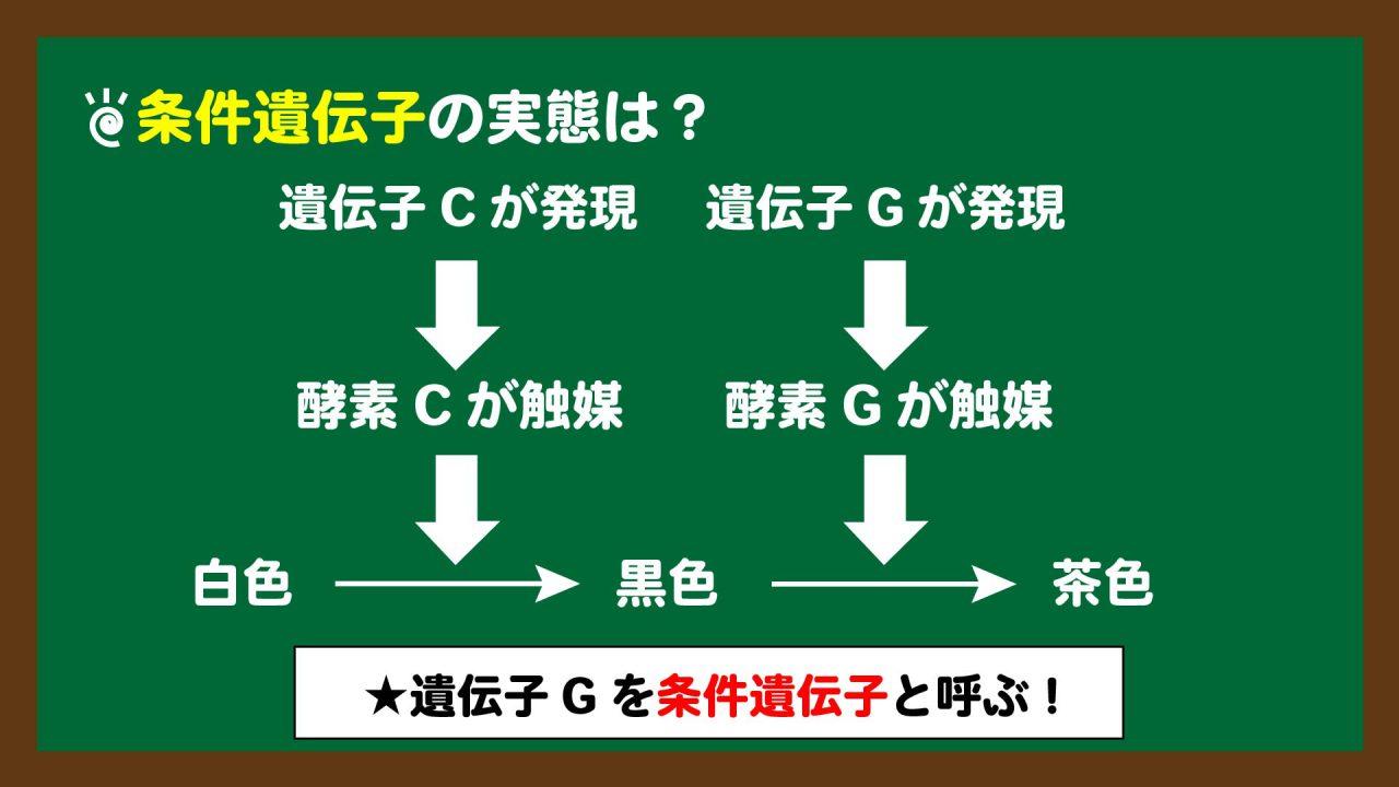 スライド2:条件遺伝子の実態