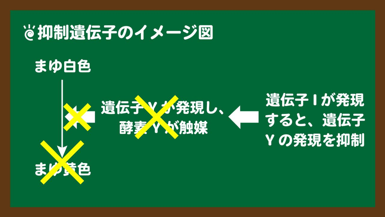 スライド2:抑制遺伝子のイメージ図