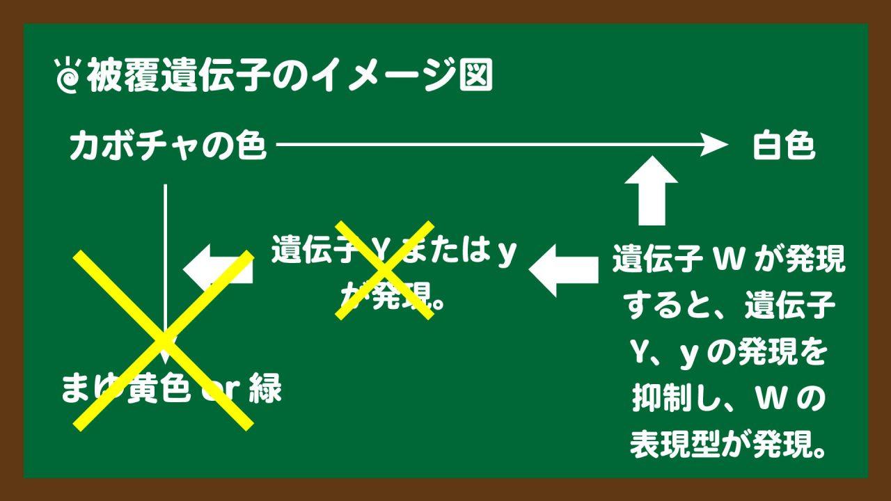 スライド2:被覆遺伝子のイメージ図
