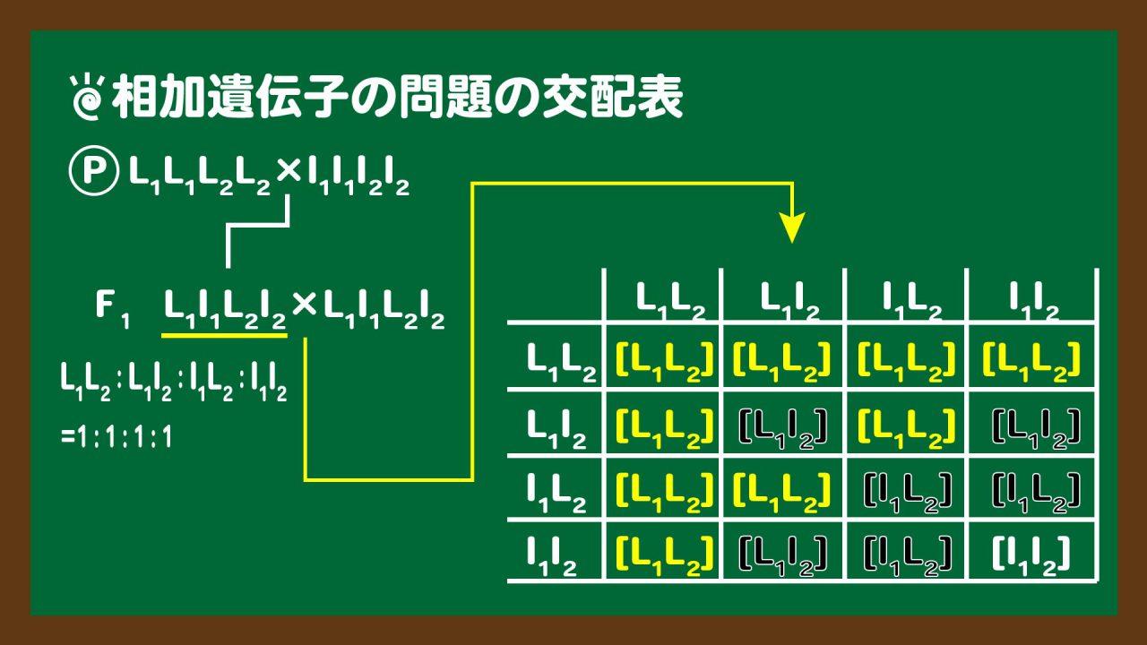 スライド2:相加遺伝子の問題の交配表