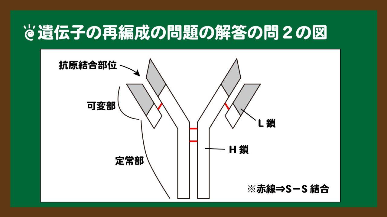 スライド3:問2の図(抗体の図示)