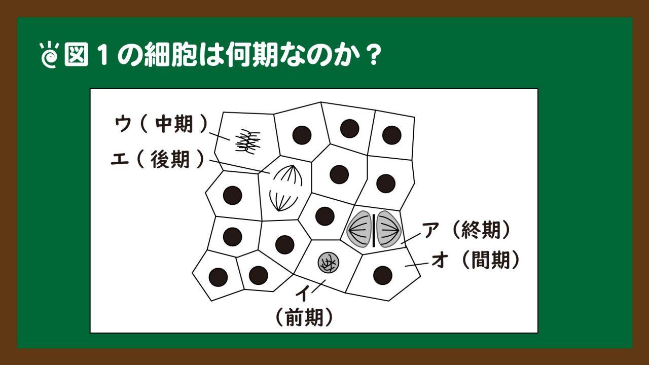 スライド8:図1の解釈