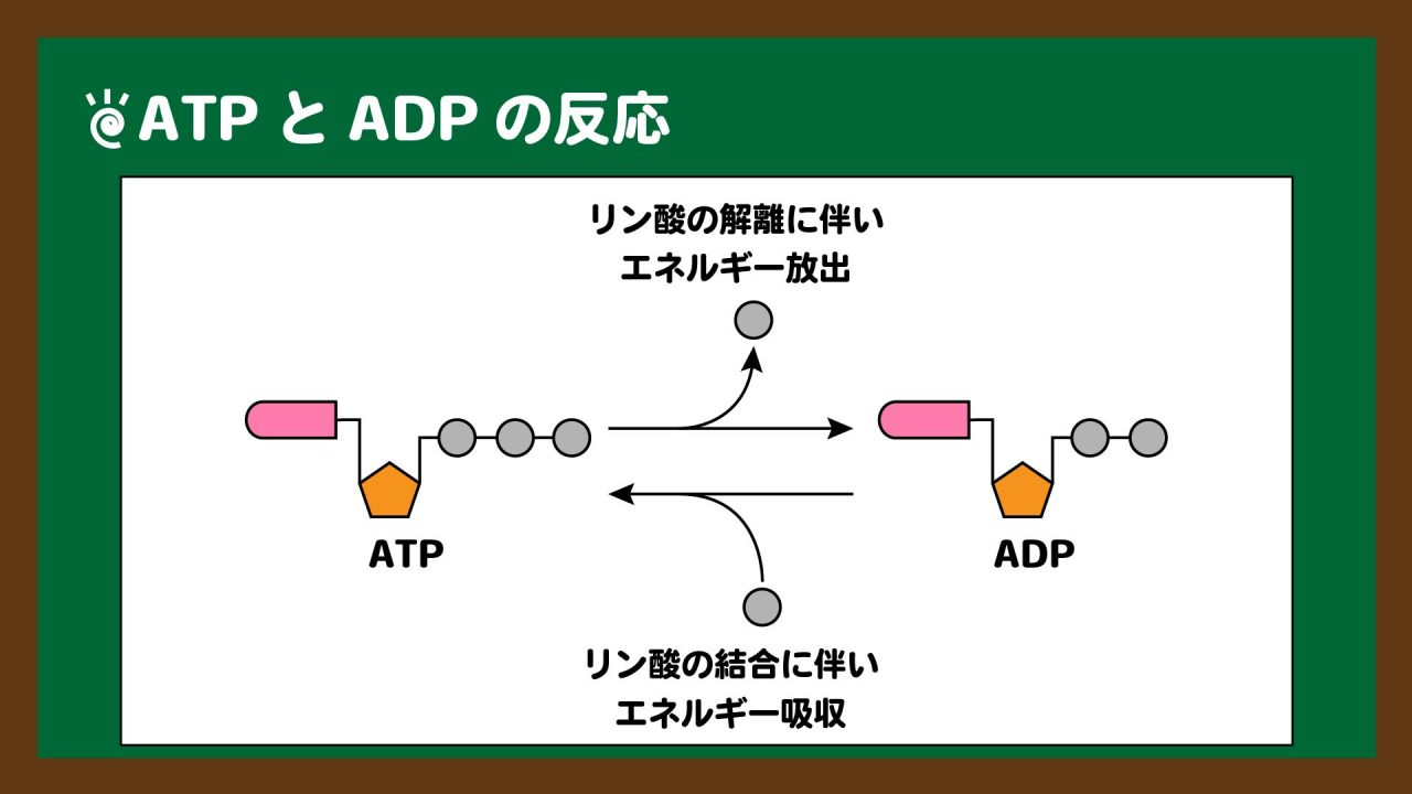 図.ATPとADPの反応