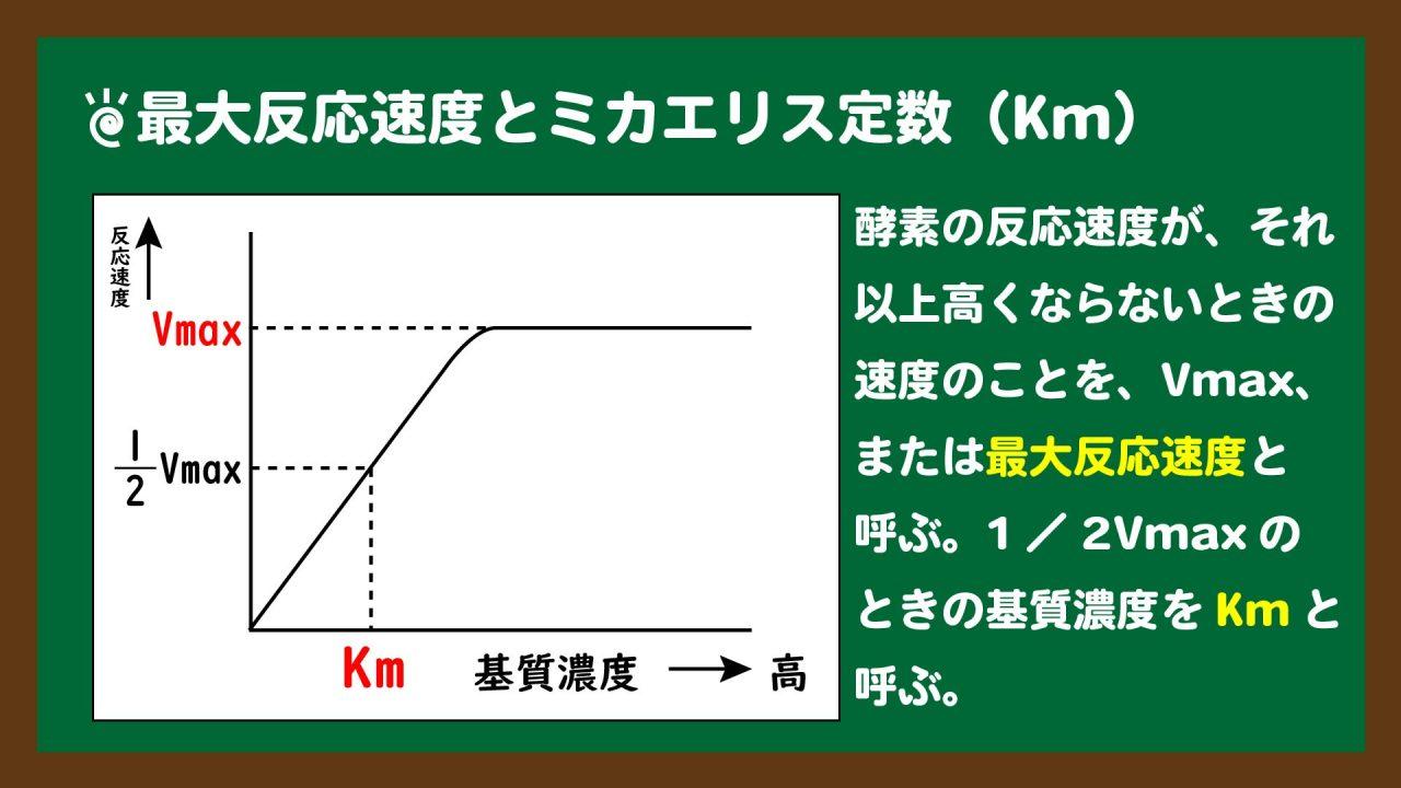 スライド3:最大反応速度とミカエリス定数(Km)